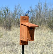 bird and box